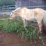 Faire Pferdehaltung durch abwechslungsreiches Futter
