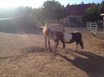 Pferde brauchen als Herdentiere auch Sozialkontakte