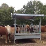Pferde sind Dauerfresser und brauchen sehr viel Heu