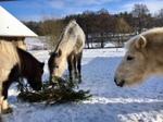 Abwechslungsreiches Futter und Sozialkontakte sind sehr wichtig für Pferde