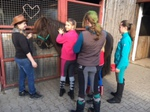 Fasching bei den Pferden