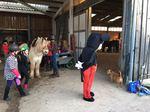 Pferde werden für Fasching geschmückt