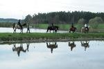 Photoshooting mit Pferden