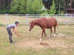 Kommunikation mit Pferden