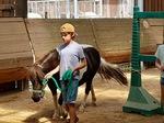 Führtraining mit Pferden